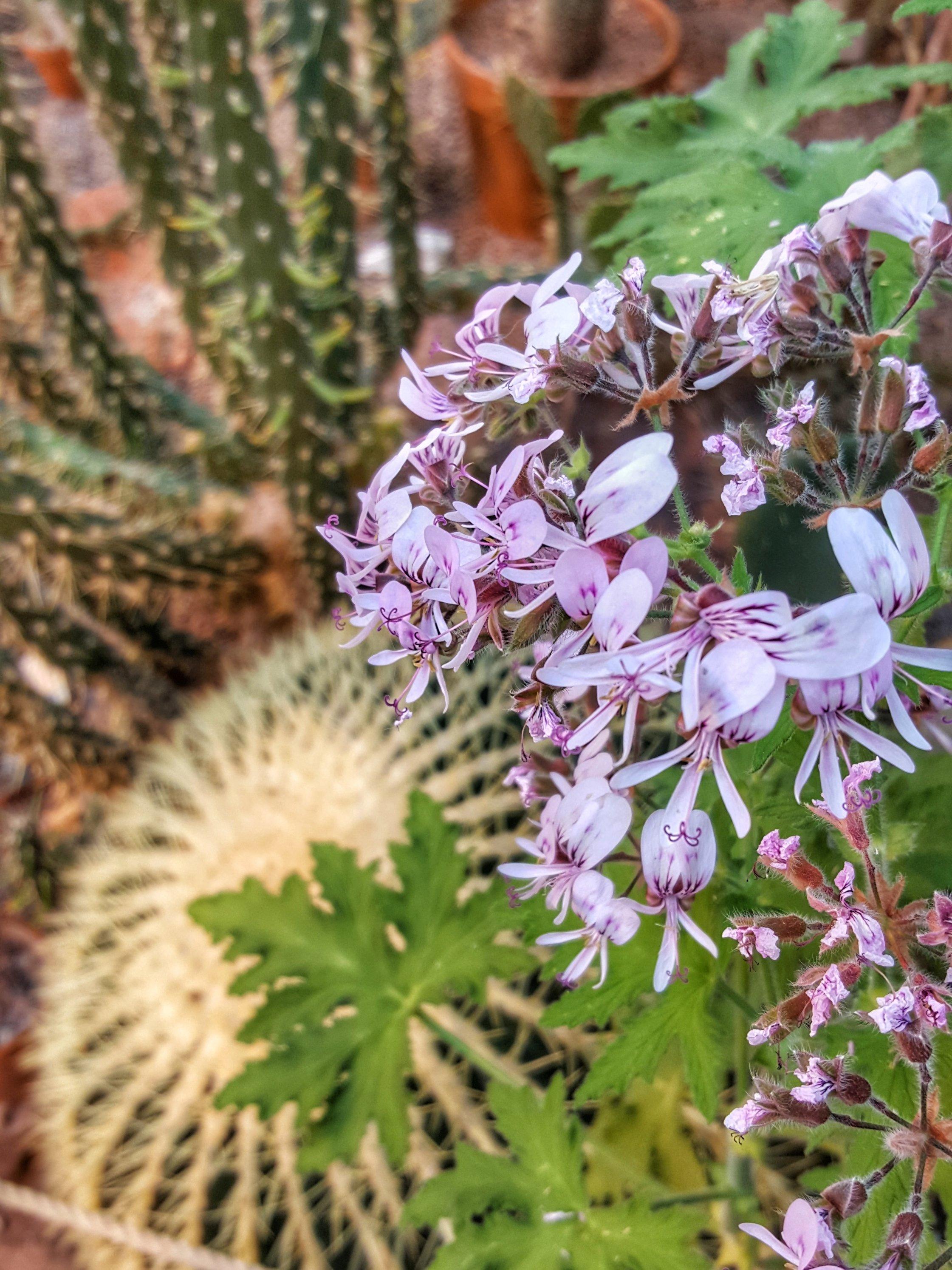 flower cactus botanic garden Finland