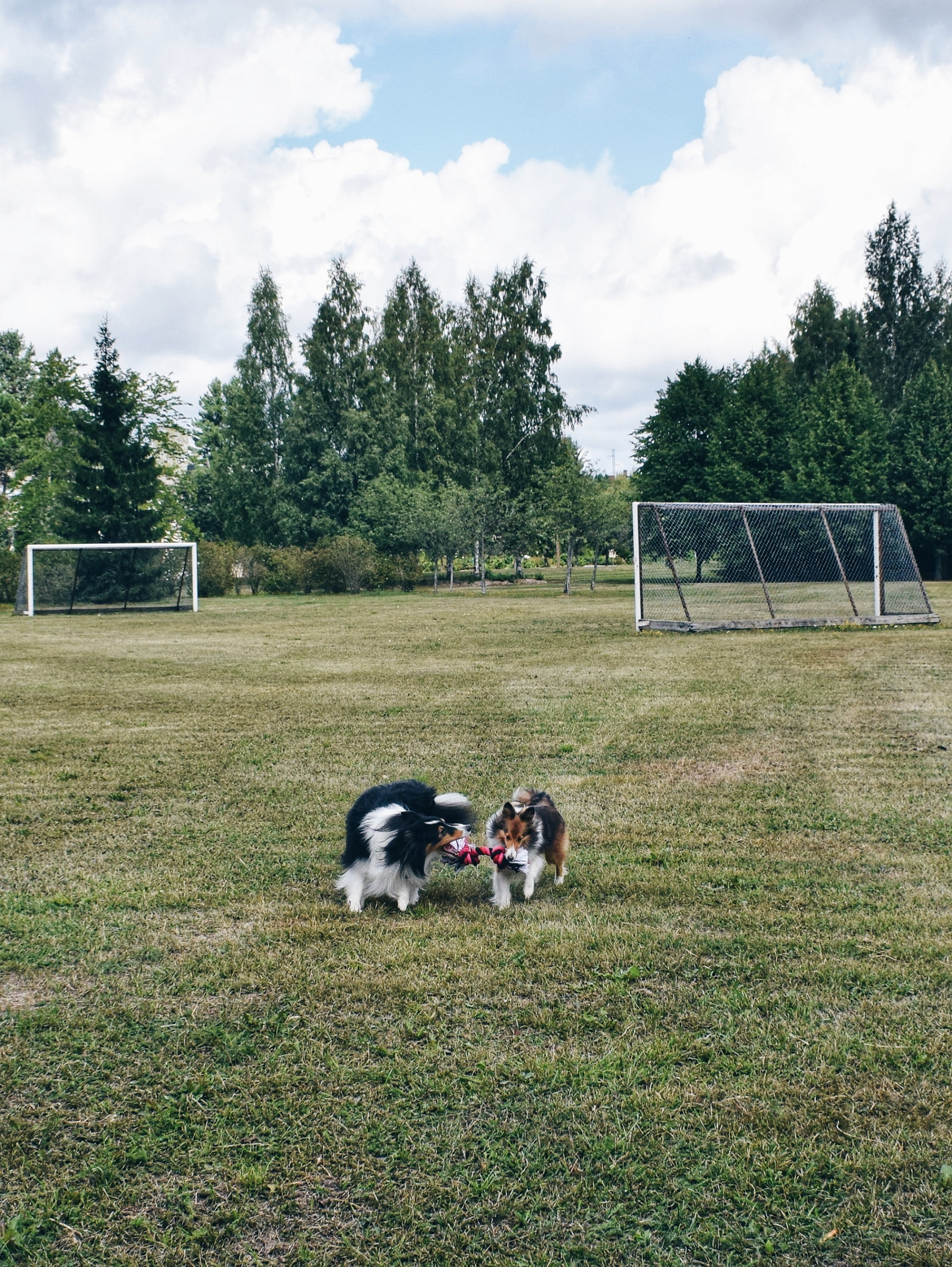 Outlandish blog photography challenge dogs passion