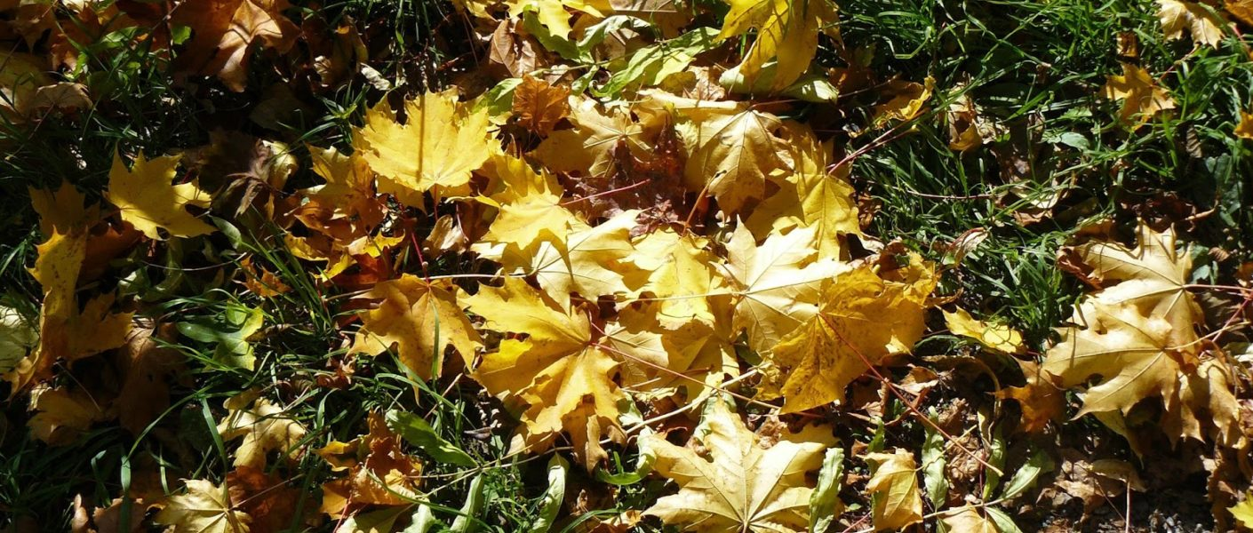 Outlandish blog autumn travel destinations Scotland