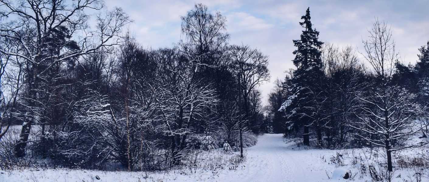Family Christmas traditions winter landscape photography
